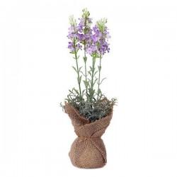 Plante décorative 119596...