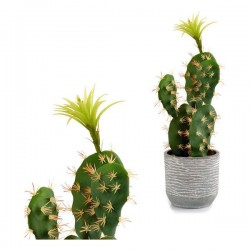 Cactus Plastique Blanche...