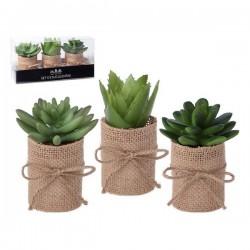 Plante décorative 119626...